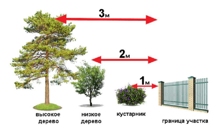 rasstoyanie_ot_granicy_uchastka_do_rastitelnyh_posadok